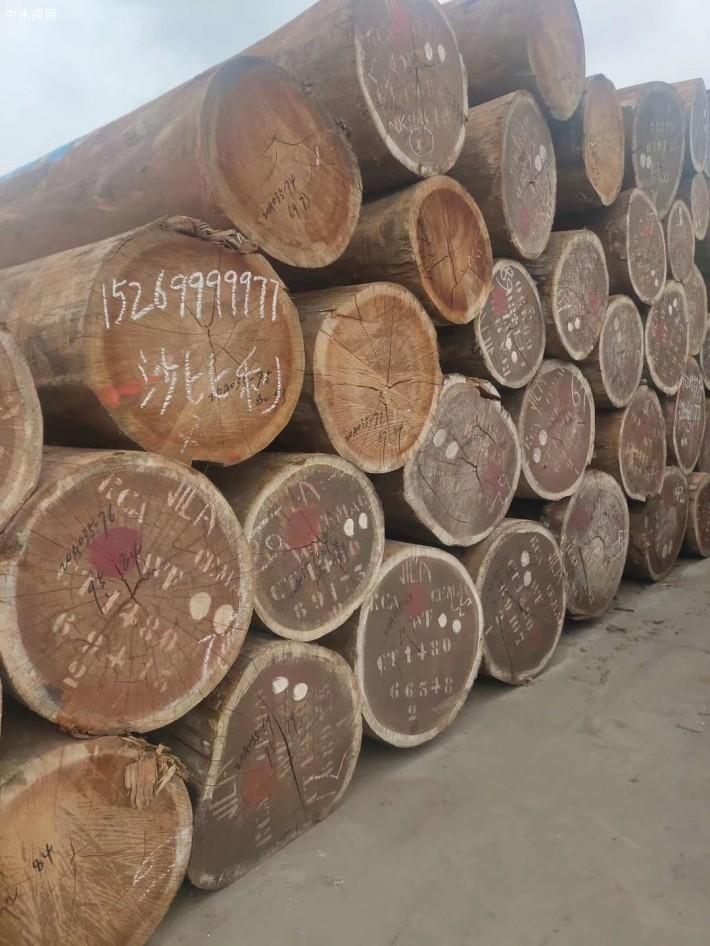 非洲进口沙比利原木高清视频图片