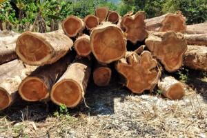 哥斯达黎加柚木原木原产地直销