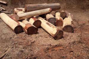 哥斯达黎加微凹黄檀原木原产地直销