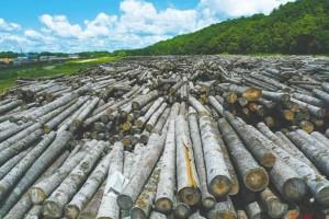 受新冠肺炎疫情的影响,俄罗斯森林工业重返国内市场