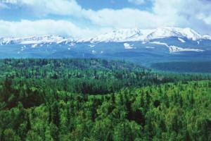 广东省近10年森林资源稳步增长