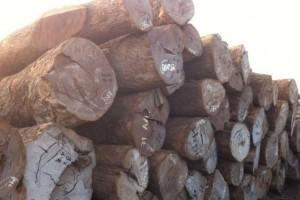 皮灰(风车木)木材价格行情_2020年7月10日
