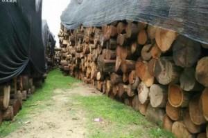 缅甸柚木原木价格行情_2020年7月10日