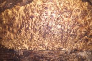 缅甸金丝楠木大板,波纹板,黄金樟树瘤板,一手货源