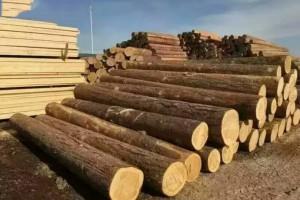 辐射松木材价格行情_2020年7月13日