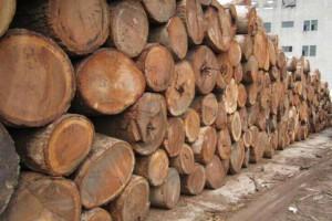 7月份缅甸累计查获81张非法柚木门非法木材10吨