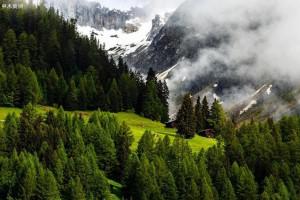2025年广东森林,林木和林地总产值将达万亿元