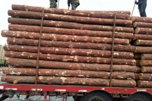 二连浩特口岸上周木材总到货260车