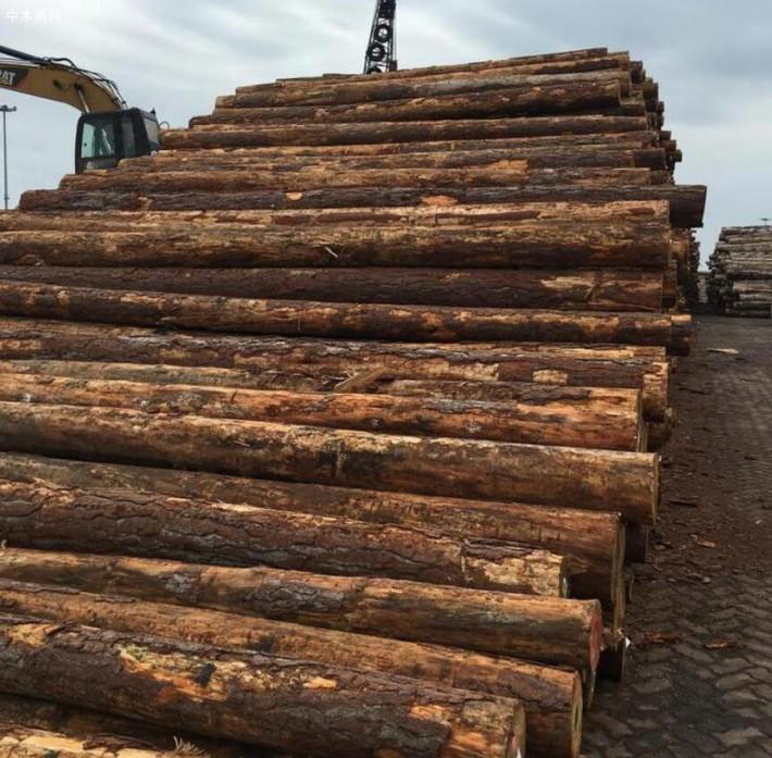 求购:辐射松原木4米旋切木皮料