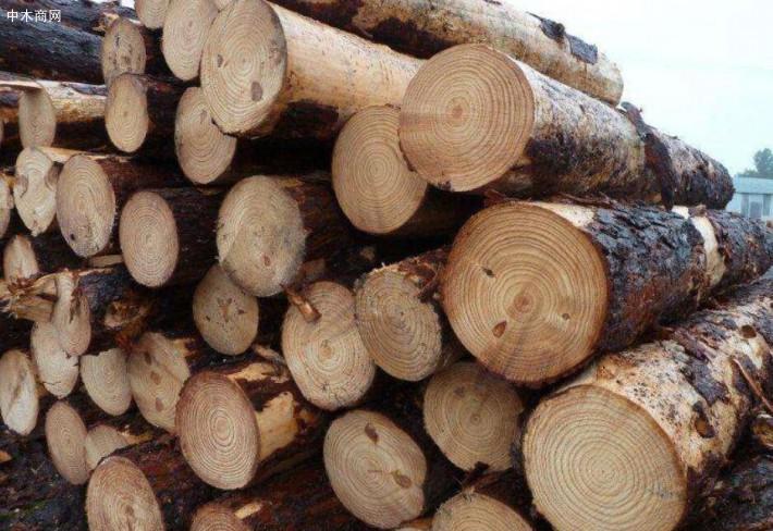 求购:60cm进口松木原木2.2~2.4米,联系电话:18637068225
