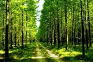 沙捞越州森林部增加人工林的额外策略