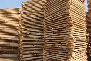 西北国际木材市场交易中心挂牌落成