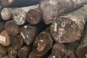 巴新政府拟在2025年禁止原木出口政策
