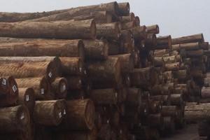 优质桉木原木原产地批发价格