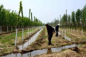临沂市兰山区:五年造林4.99万亩,国土绿化提速增效