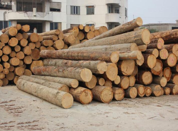 江苏太仓镇江等口岸的辐射松木材库存过剩