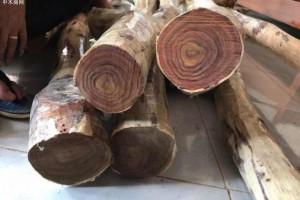 越南木材及木制品出口收入在今年上半年达到53亿美元