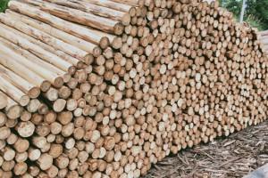 大量供应优质杉原木,不同规格杉木原木和杉木檩条