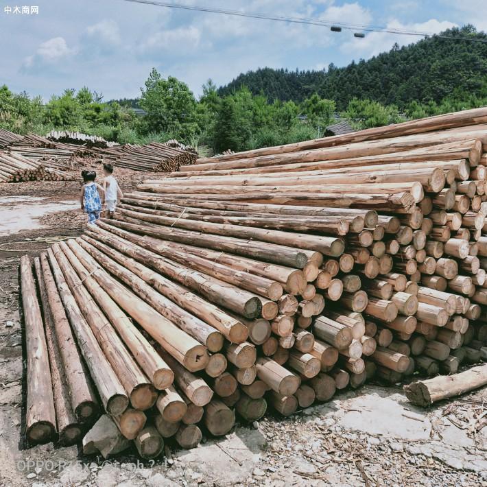 大量供应优质杉原木,不同规格杉木原木和杉木檩条价格