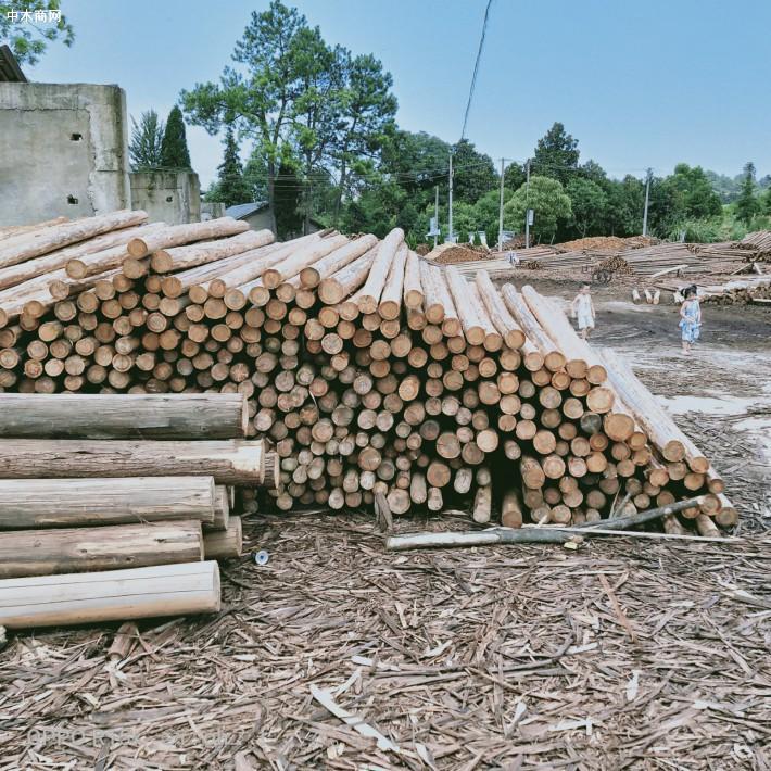 大量供应优质杉原木,不同规格杉木原木和杉木檩条品牌