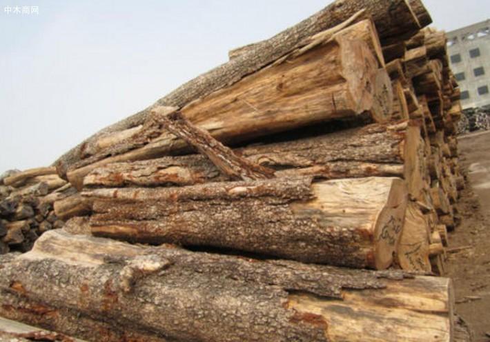 非洲檀香木原木价格多少钱一吨_2020年7月28日