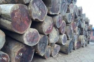 大径级菠萝格原木价格行情走势_2020年7月30日