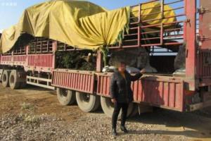 运输木材中携带危险性病虫害,一男子被判刑
