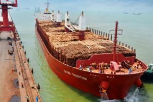 新民洲港木材贸易实现逆势上扬