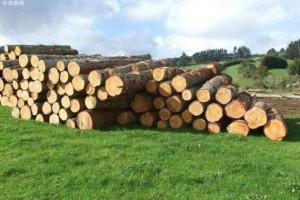新西兰原木价格下跌约6新西兰元/ JASm3_2020年7月31日