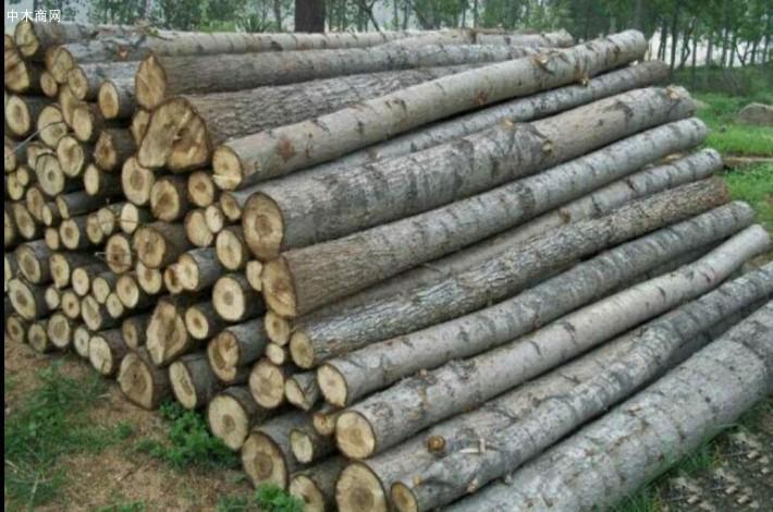 求购:长期大量现场收购杨木原木,杨树林,柳树,榆树,桐树,马尾松,旧木材,柴火,树枝