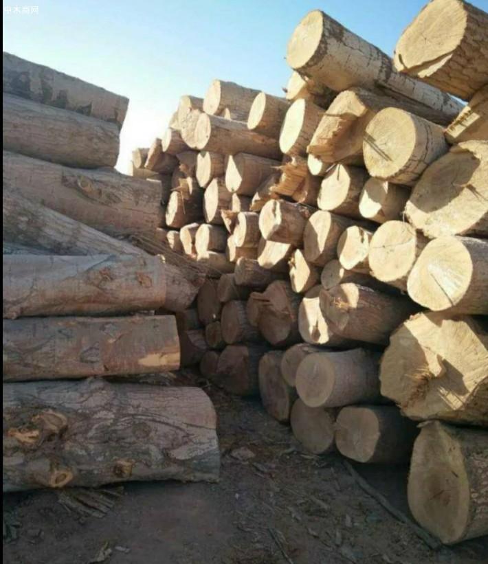 求购:长期大量现场收购杨木原木,杨树林,柳树,榆树,桐树,马尾松,旧木材,柴火,树枝品牌