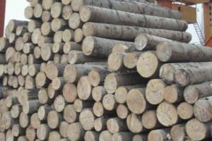 杨木原木批发价格