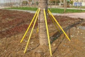 树木支架厂家批发价格