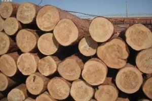 樟子松木的用途及特点有哪些?