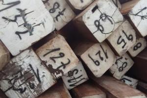 秘鲁良木豆,白坚木等锯材价格行情_2020年8月4日