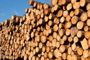 广西省贵港木材业上半年产值逾190亿