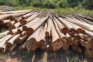 国标杉原条材积表
