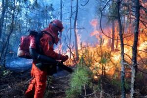 俄罗斯8月森林火灾风险系数预测有超过多年平均值的可能性