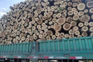 求购:常年大量收购杨木原木,杨树原木,杨木木材,杨树林