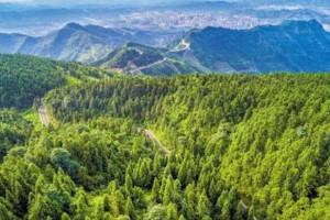 浙江省林业产业发展大会在杭州召开,对重点龙头企业进行了表彰