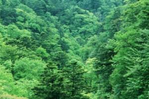 3千亩山林树木出售