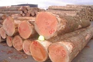 新西兰国内原木加工厂需求保持稳定