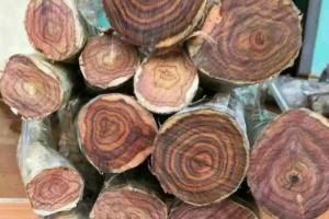 2020年前7月越南木材和木制品出口额增长6.2%以上