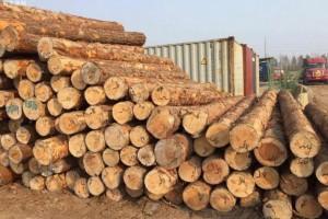 一带一路助力中国与白俄罗斯木材贸易增长