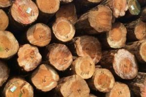 重庆原木木材批发市场价格行情_2020年8月11日