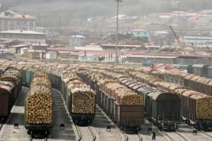 2020年上半年俄罗斯木材运输状况分析