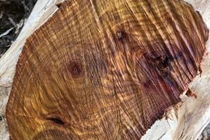 《越南新闻》越南木材和木制品出口保持增长