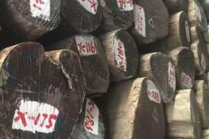 印度柚木原木进口和境内的运输保持通畅