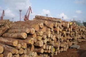 2020年上半年我国原木锯材进口木材4184.95万立方米