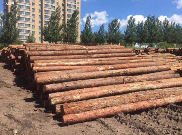 求购:白松原木打桩材
